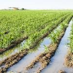 crop damage