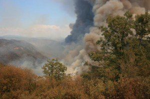 Rim Fire. Photo: inciweb