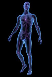 X-ray illustration of male human body and squeleton. 3D render. QBE European Operations