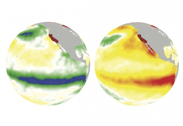 On the left, La Nina cools off the ocean surface (greens and blues) in the winter of 1988. On the right, El Nino warms up it up (oranges and reds) in the winter of 1997. Chart: Jin Ho-Yoon/PNNL
