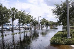 The low level Florida terrain in many areas makes even a relatively small sea-level rise problematic. Photo: Florida Atlantic University