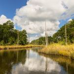 Water inlet along wetlands of Pamlico River in coastal region of North Carolina.