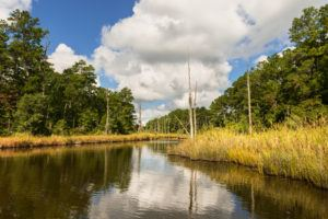 Water inlet along wetlands of Pamlico River in coastal region of North Carolina.