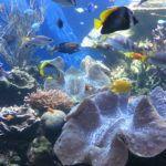 giant_clams_and_fish_at_waikiki_aquarium