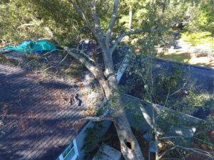 Photo of tree damage captured by drone. Photo: Travelers