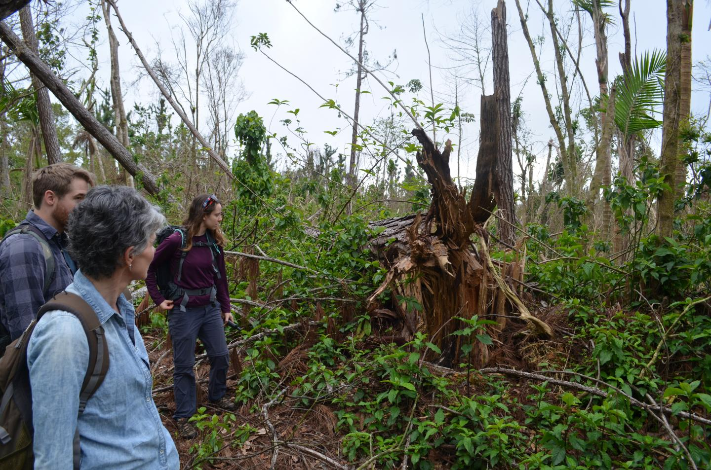 Rain, More Than Wind, Led to Massive Toppling of Trees in ...